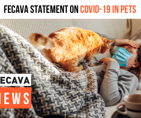 FECAVA Statement on COVID-19 and pets